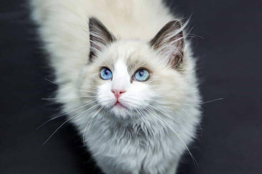 allergia pelo di gatto