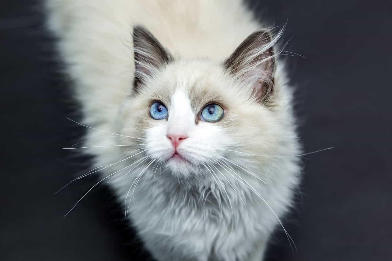 comunicazione non verbale gatto