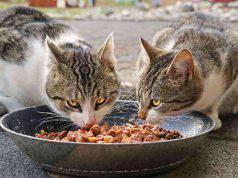 dieta barf gatto