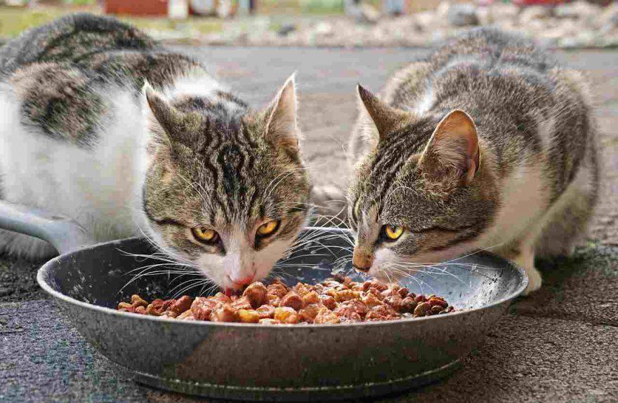 Prosciutto al gatto
