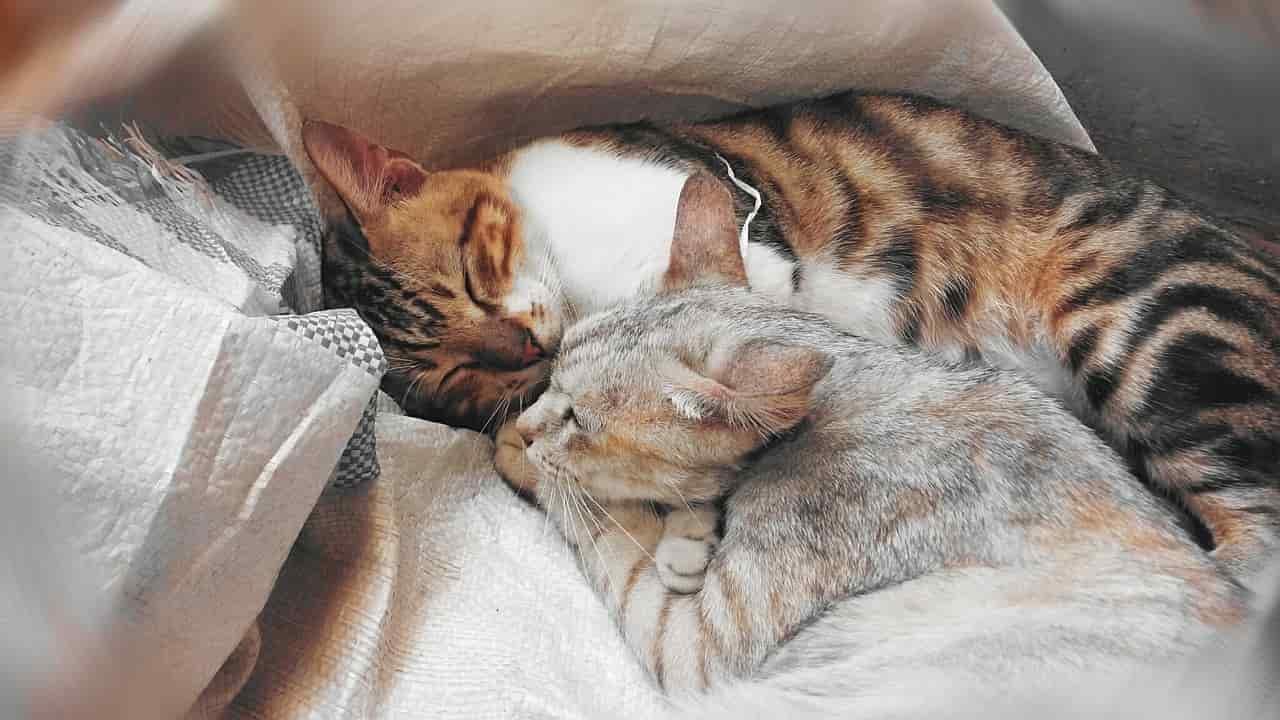 cura gatto sterilizzato
