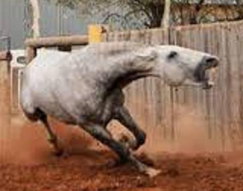 disagio del cavallo amor en