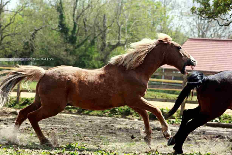 cavalli mordono