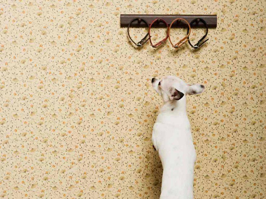 cane fissa muro