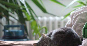 colite nel gatto: cause, sintomi e rimedi (foto Pixabay)