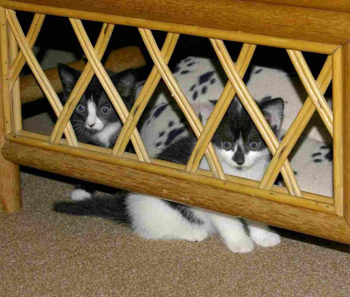 come aiutare un gatto timido (foto Pixabay)