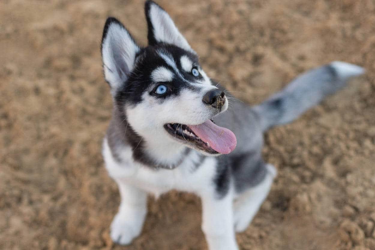 comportamento ossessivo compulsivo cane