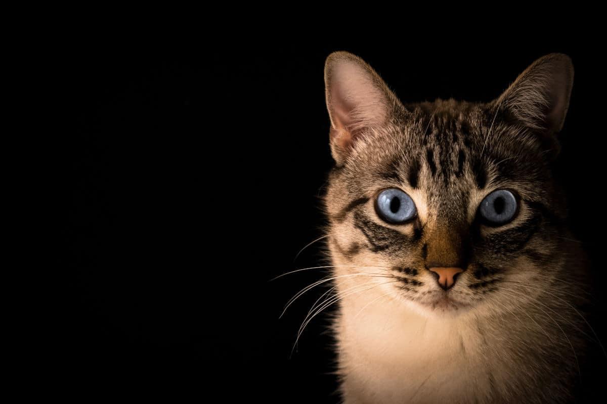 gatto fissa persone
