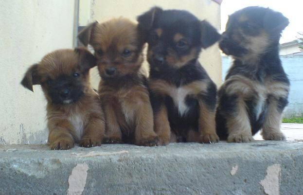 cuccioli in regalo