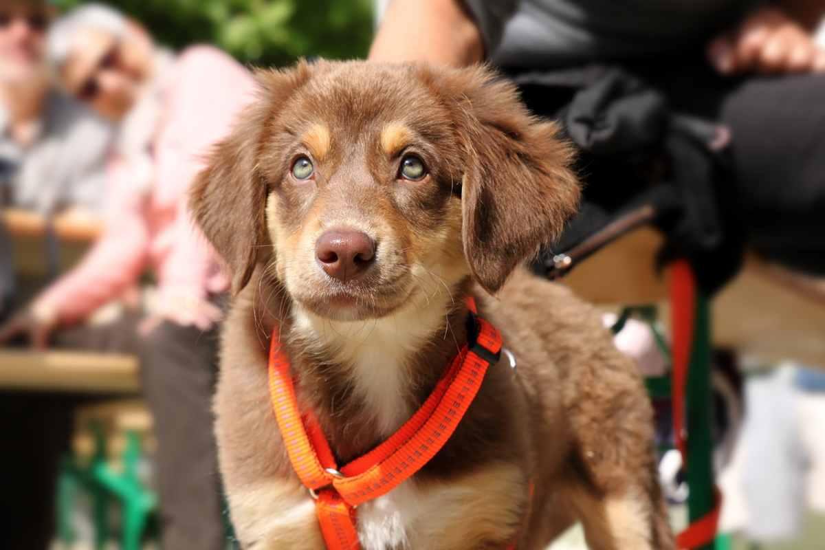 Perché il cucciolo non cammina (foto Pixabay)