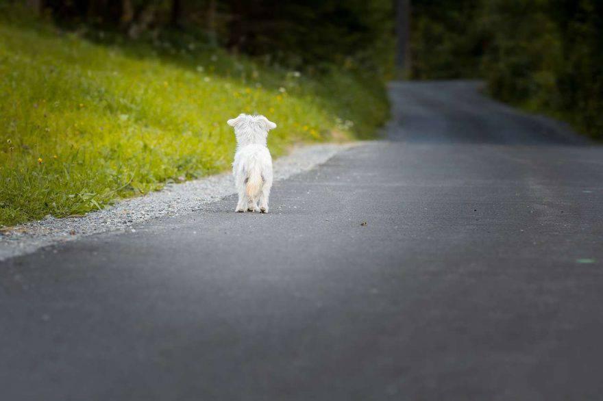 cosa pensa cane abbandonato
