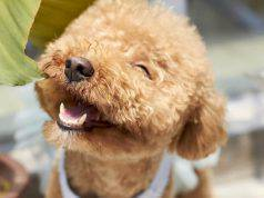cani ridono sorridono