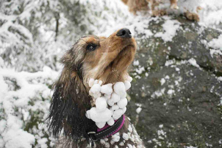 Influenza nel cane