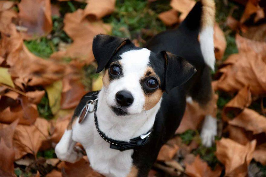 alimentazione cane autunno