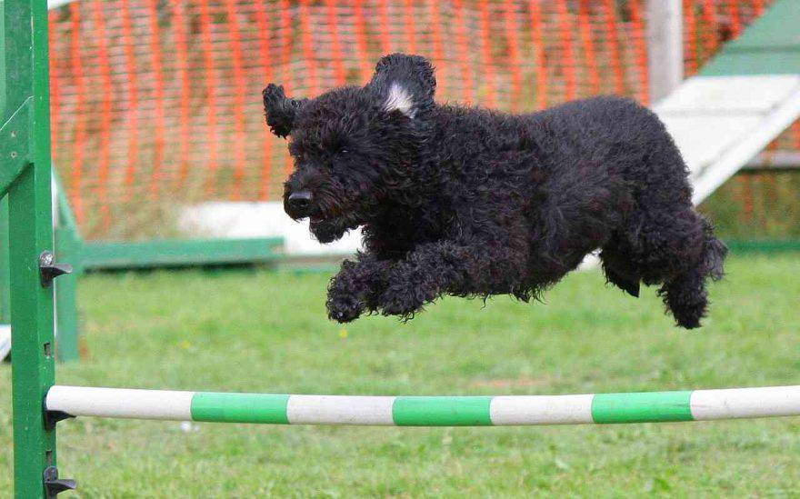 Percorso Agility Dog