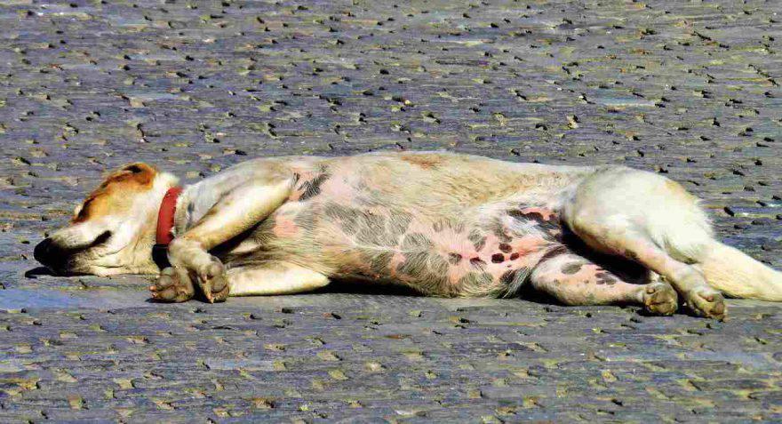 Mal di stomaco nel cane
