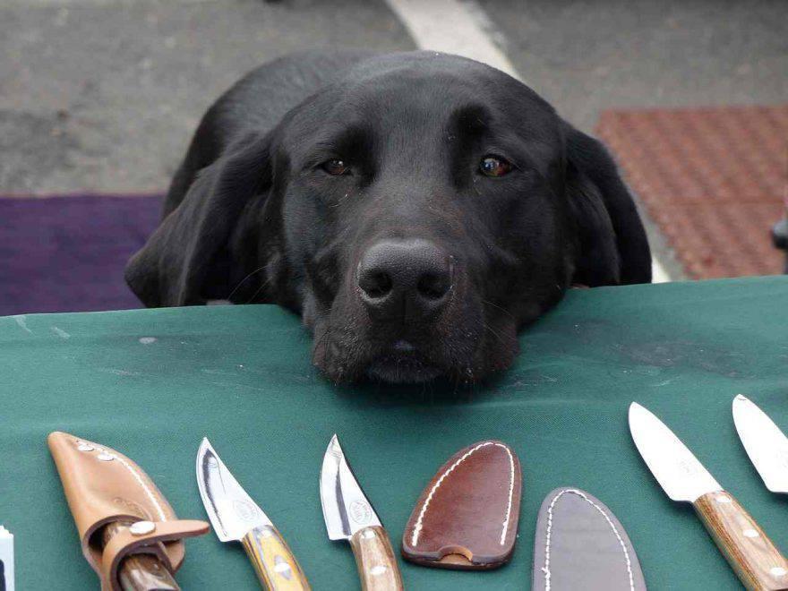 Incidenti domestici cane