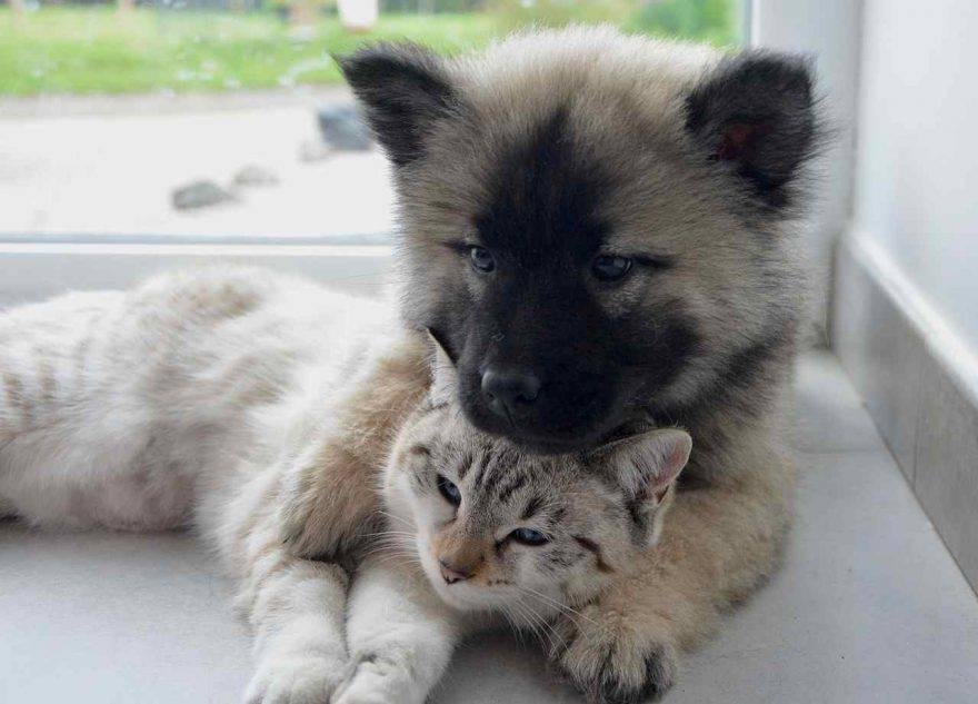 Cane adulto e gatto cucciolo