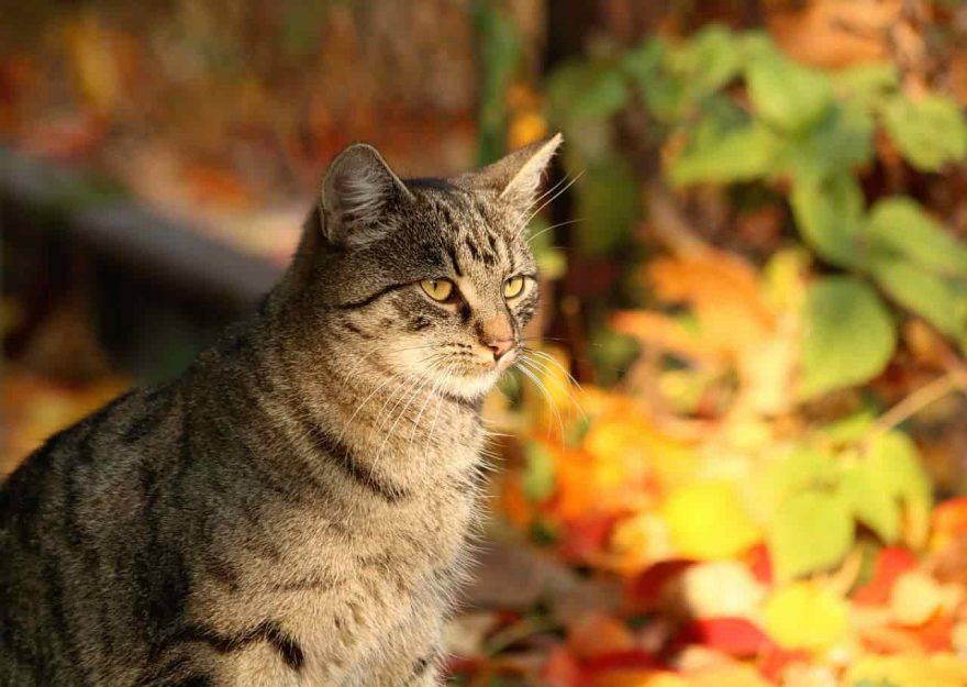 alimentazione gatto autunno
