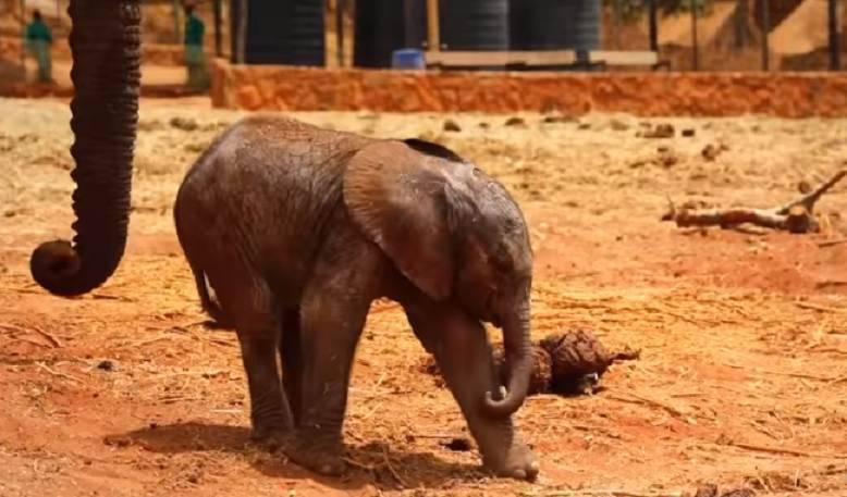 riconoscenza elefante