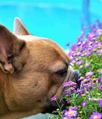 Allergie nei cani