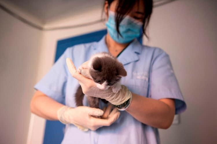gatto lingua fuori veterinario