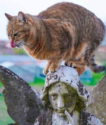 gatto iperattivo: cause e rimedi per calmarlo (foto Pixabay)