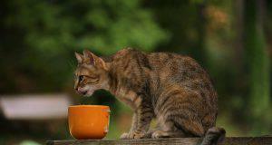 gatto rovescia ciotola cibo