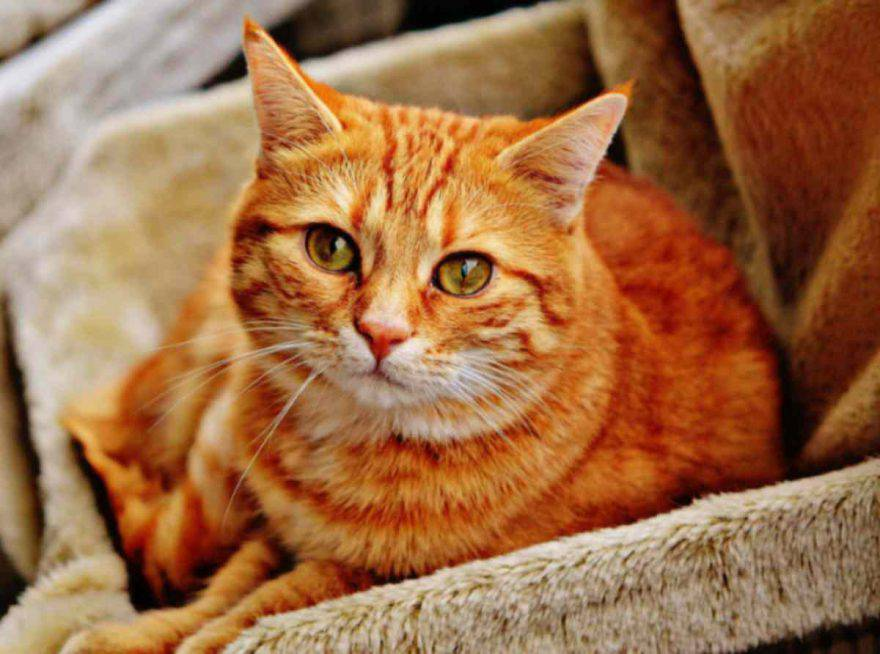 gatto sdraiato infreddolito