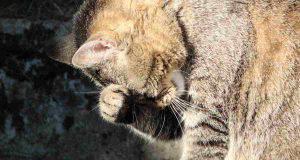 gatto sofferente