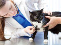 prima visita del gatto dal veterinario (foto iStock)