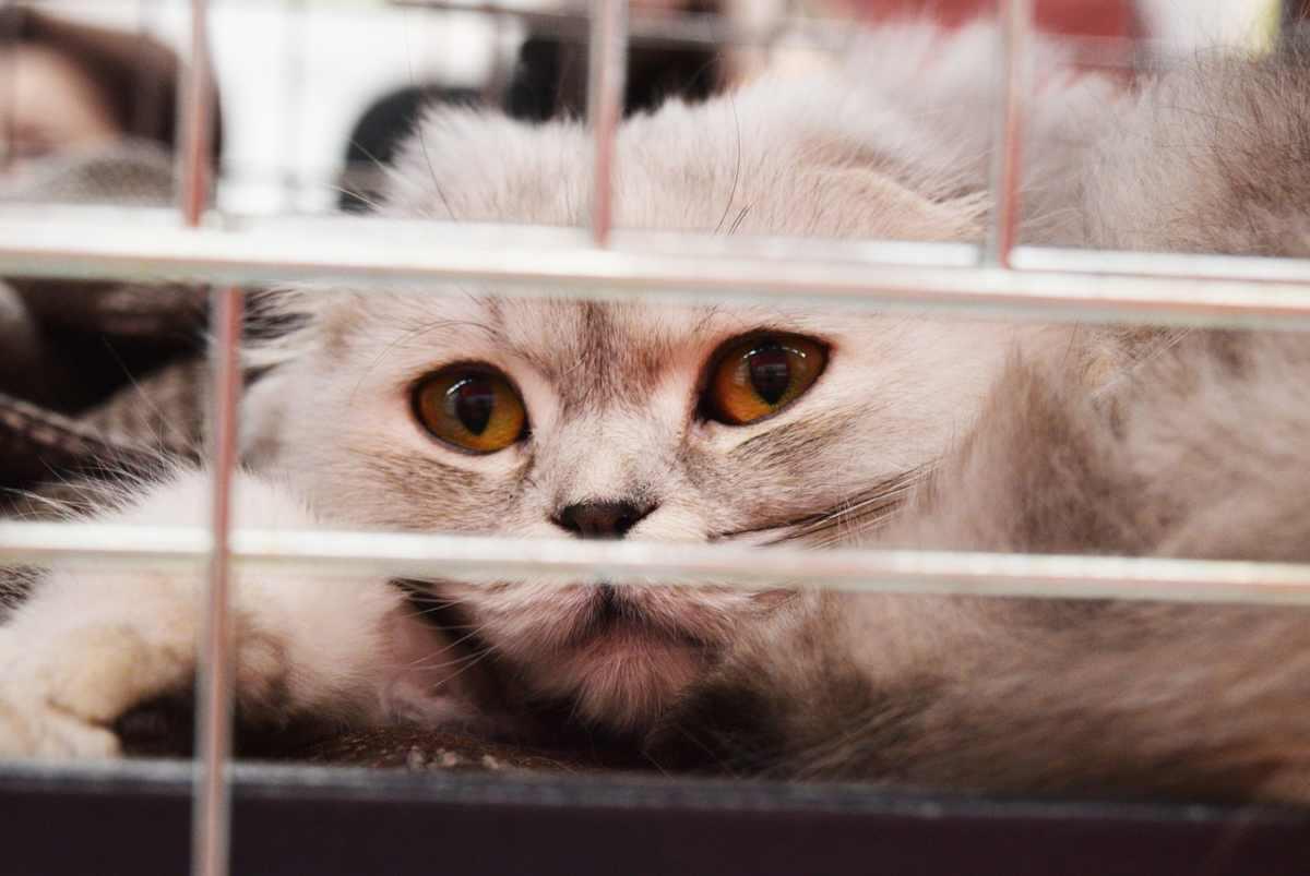Prima visita del gatto dal veterinario (foto Pixabay)