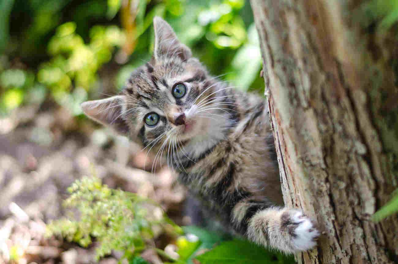 gatto piacciono posti alti
