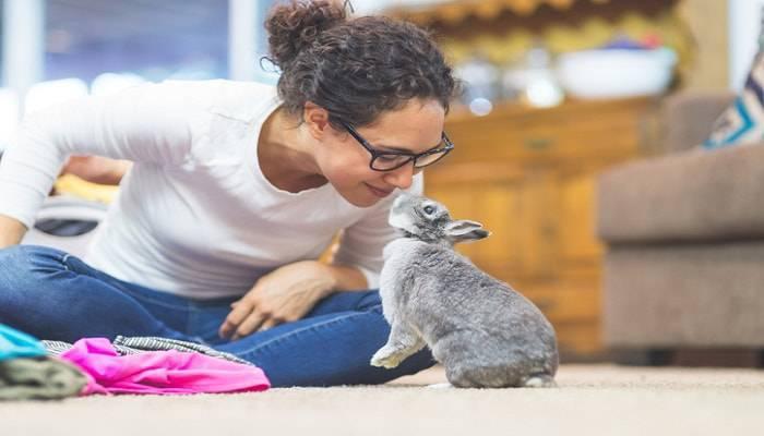 giocare coniglio