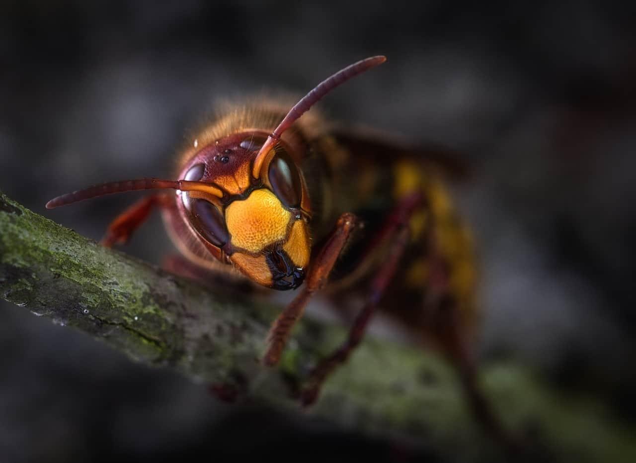 gli insetti e le allergie al veleno