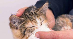 raffreddore gatto