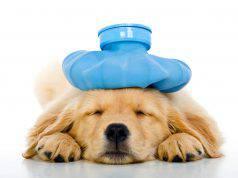 bronchite nel cane (foto iStock)