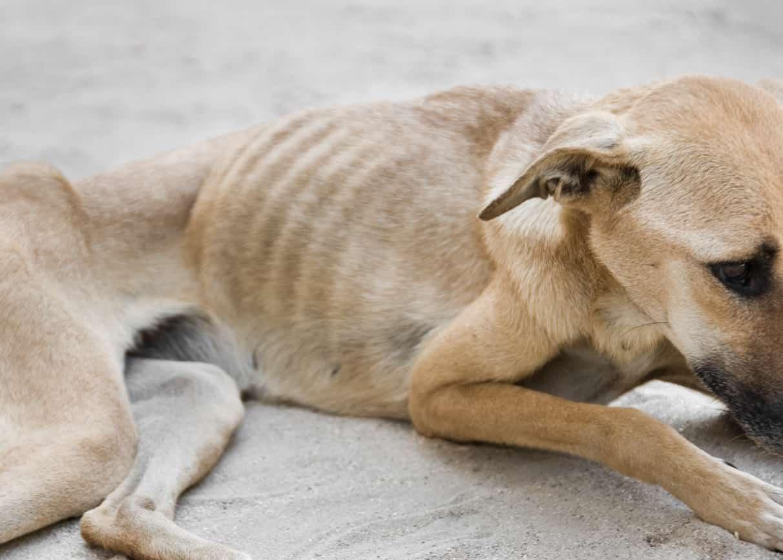cane troppo magro