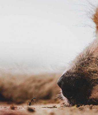 il cane ha mangiato le formiche (foto Pixabay)