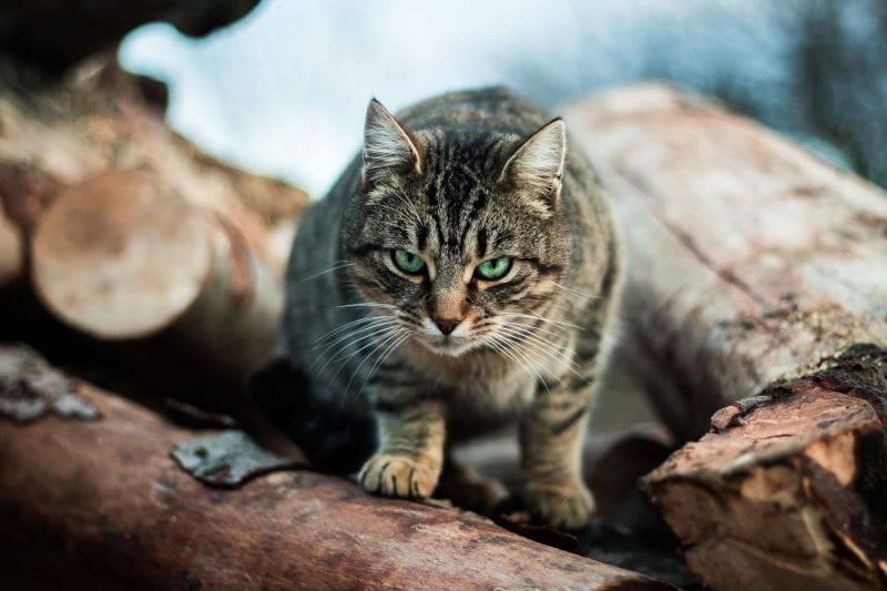 gatto fissa gente