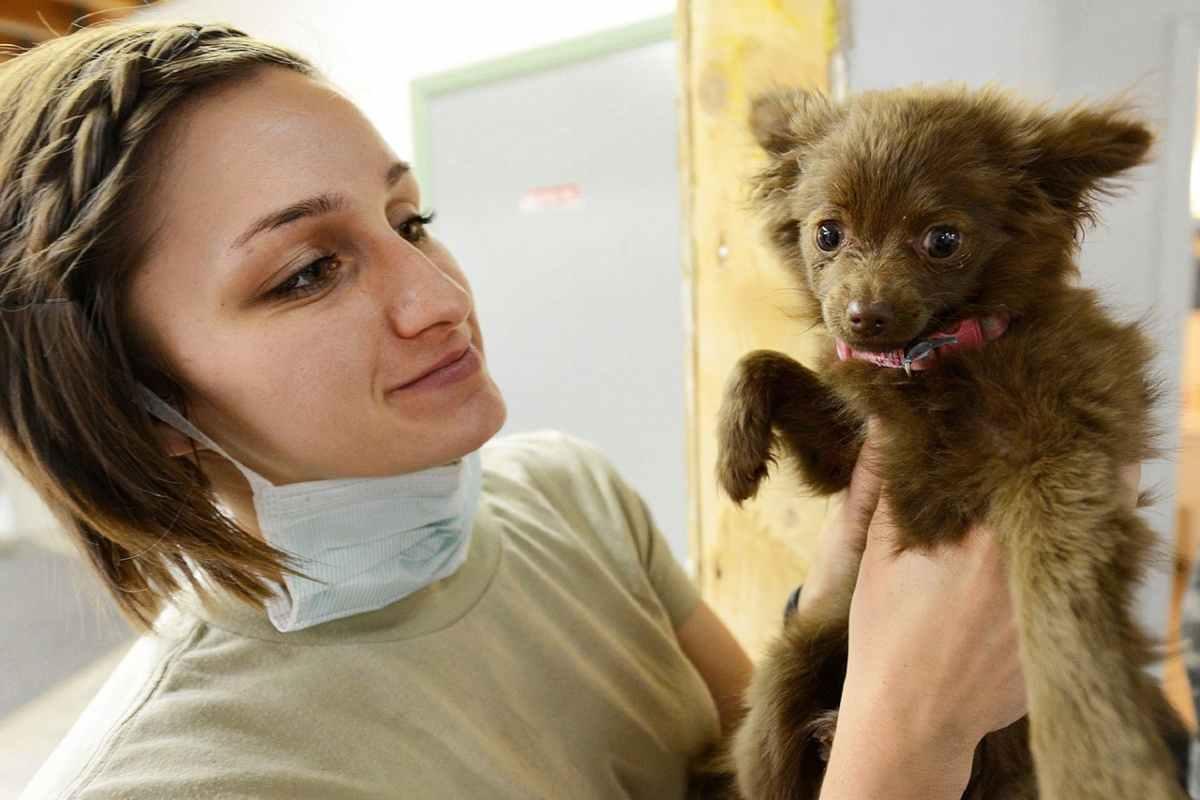 la prima visita del cucciolo dal veterinario (foto Pixabay)