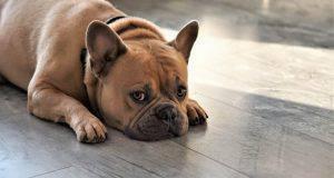 lussazione rotula cane