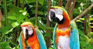 Voliera pappagalli