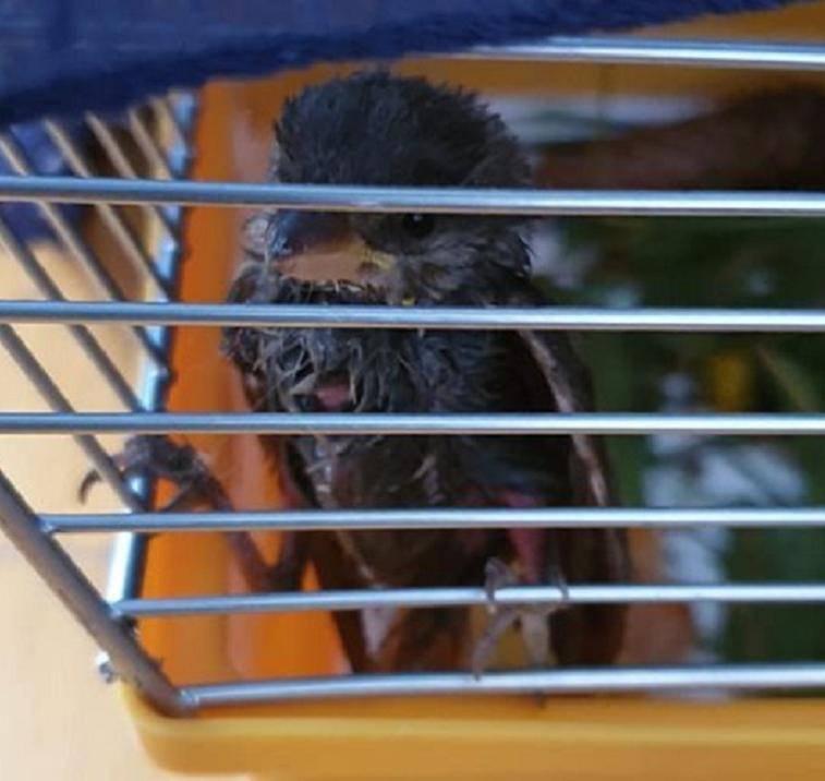 uccelli colla pasticceria cortina
