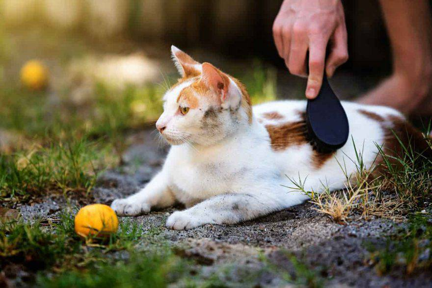 pelo unto gatto