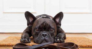 perché il cane non vuole camminare ( foto iStock)