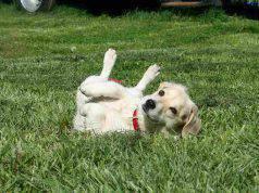 cane rotola terra