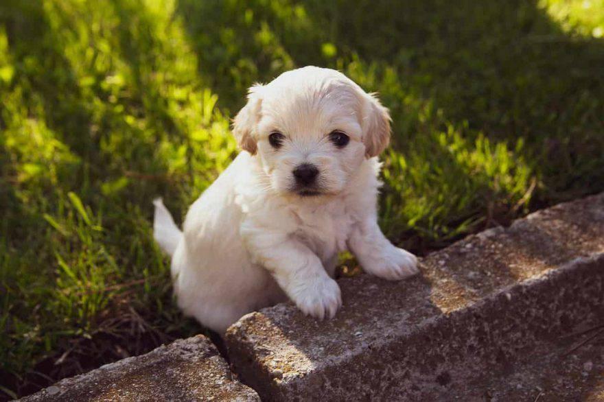 svezzamento cuccioli cane