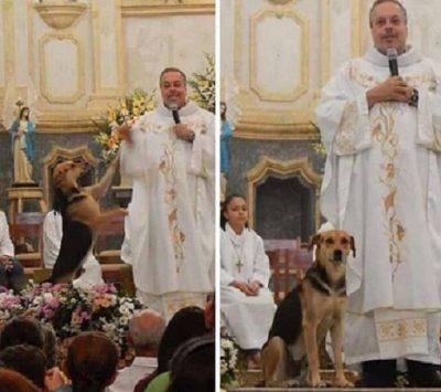padre cani messa