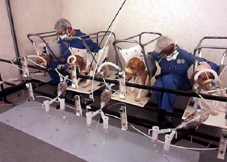 test cani sperimentazione fumo